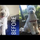 Grooming Your Dog at Home Doesn't Have to Be Horrible