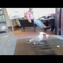 LOL This Seagull Walks Into A Store And Steals A Bag Of Chips