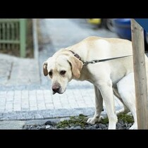 Why Dogs Spins Before They Poop
