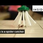 If You Are Freaked Out About Spiders