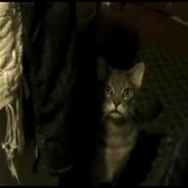 Iiiiiiiiit's Hey Cat!! Just 30 seconds and you need your sound