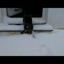 Cat Meets Snow