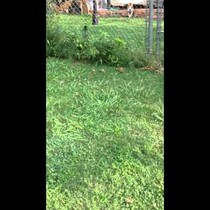 Mailman Posts Video Of Dog On His Route