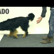 WATCH: Magic tricks and dogs don't match :(