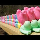 Peeps Being Shot with a .50 Caliber Rifle in Slo-Mo