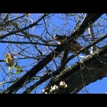 Hawk vs. Squirrel