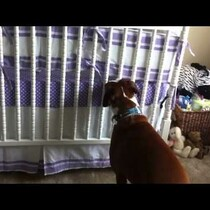 SO Cute! Dog Responds to Newborn Crying!