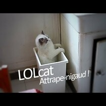 EVERYBODY KNOWS I LOVE CATS, SO HERE'S A CUTE CAT VIDEO THAT'S FUNNY...ENJOY