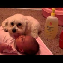 Adorable: Puppy Protects Baby From A Blow Dryer (Watch)