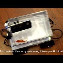 Fish Drives Car.....Yep!