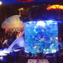 Fish Tank Bursts at Downtown Disney's T-Rex Restaurant!! Oh No!