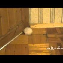 A big fat hamster, a too-small door gap and a dream. Hilarity ensues