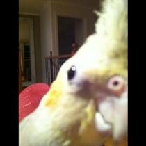 Bird Sings Dubstep
