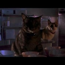 WTF?!? SOMEONE REPLACED THE VELOCIRAPTORS IN JURASSIC PARK WITH CATS! (VIDEO)