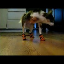 WATCH: Dogs vs boots