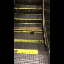 A Rat Tries to Run Down an Up Escalator . . . And a Dog in a Swimming Pool Refuses to Swim