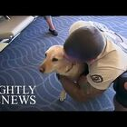 Woman Reuniting Vets With Their Retired Service Dogs!