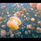 Swimming In Jellyfish Lake - NO THANKS!!!