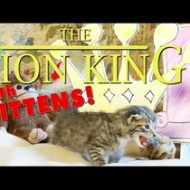 THE LION KING (with kittens)