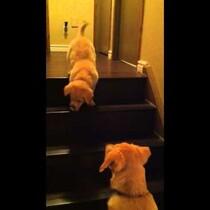 Dog helps puppy