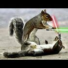 [WATCH] Chipmunks Lightsaber Battle!