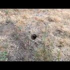 How 'NOT' To Kill An In-Ground Wasp Nest!