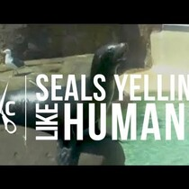 SEALS Yelling Like Humans