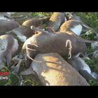 323 Reindeer Killed by Lightning