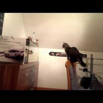 The Curious One Always Loses When It's Cat vs. Fish Tank