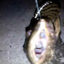New York City Amphibians