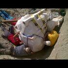T. Rex Skull Found In Montana