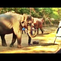 WATCH: Elephant Paints Self Portrait