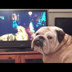 Bulldog Warns Girl On TV During Horror Movie