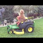 Majestic Dog rides lawn mower like a KING!!