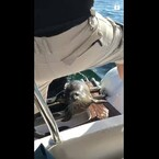 Seal Escapes Certain Death On Guys Boat