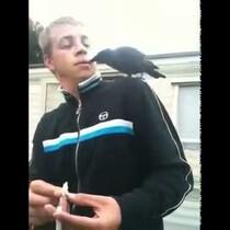 Raven Lands On Dude's Shoulder. Steals His Joint!