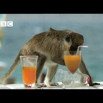 These Monkeys Party Harder Than You