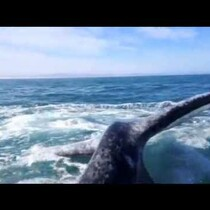 VIDEO: Girl gets slapped in the face by a whale