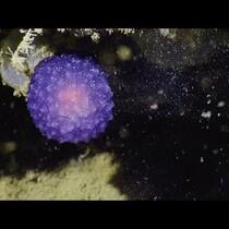 Glowing Purple Orb Discovered On Ocean Floor?!?