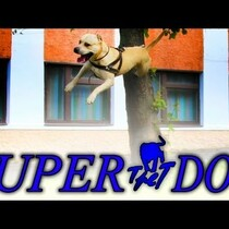 Tret Super Dog