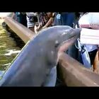 WATCH: Oops! Dolphin Snatches iPad Right Out of Woman's Hand!