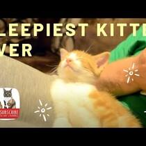 The Sleepiest Kitten Ever! Viral Video That is 'Awwwwweeee' worthy!