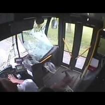 Super Deer, Hit By Bus, Survived.