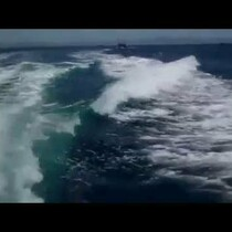 ORCAS CHASE A SPEEDING BOAT - 5.10.13 VOD