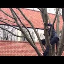 James Climbs Tree