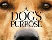 A Dog's Purpose Advance Screening