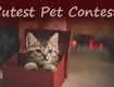 Cutest Pet 2016