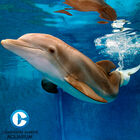 Clearwater Marine Aquarium Family Membership