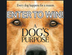 "Advanced Screening to see ""A Dog's Purpose"""