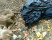 Cop Abandoned Emaciated Dog in Trash Bag, Say Police